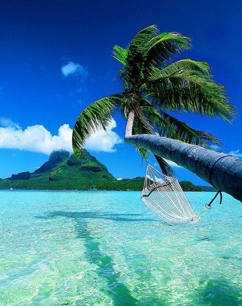 Bora-Bora-Island-19 hammock in palm